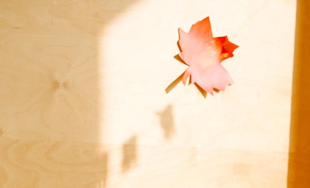Baufrösche e.V. Kinderkrippe Hannover Herrenhausen Betreuung Kind Krippe Baby Eltern Student Tages Frosch Baufroesche Anmeldung Kita Kindergarten Erziehung Nachwuchs Gruppe Pädagogik Kinderbetreuung Universtität Leibniz Spielen Krabbelgruppe Garten Elterninitiative